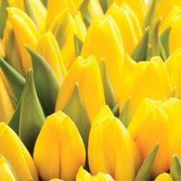 Ubrousky TaT 33x33 cm Tulipán žltý